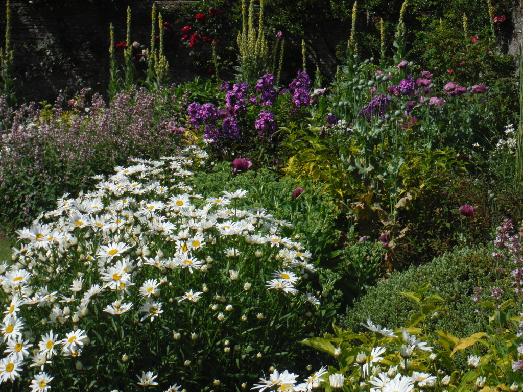 Herbaceous Perennial Planting