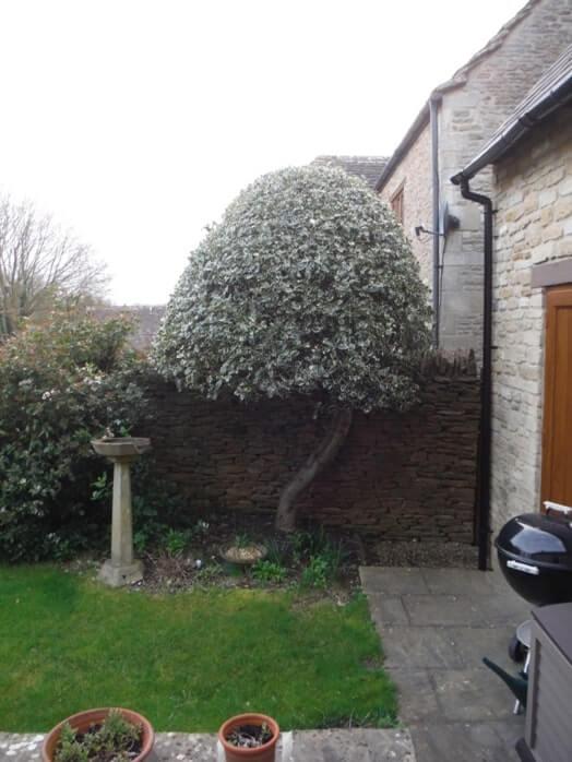 Park Lane Cottage