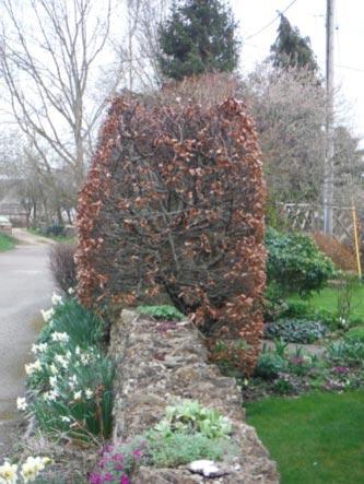 Park Lane Cottage - hedge